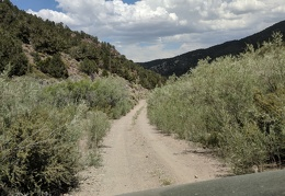 Willows and sagebrush encroach upon the road