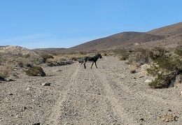 I drive farther up the road and see another burro