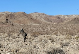 Is this burro looking for the rest of the family?