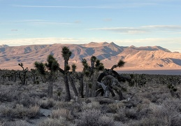 And sometimes the Joshua trees just look like they're having fun