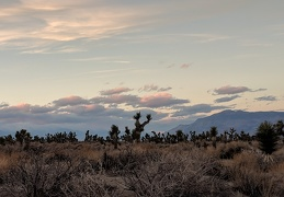 The sun goes down, but the Joshua trees don't