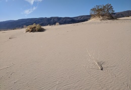 It's noon, so a dry plant sweeps across the dunes