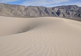 Seems I'm the only one out here on Panamint Dunes today